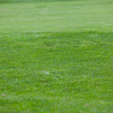 Background of short green grass Stock Photos