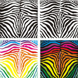 Background skin zebra, vector illustration Royalty Free Stock Photos