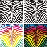Background skin zebra, vector illustration. Seamless image of a zebra striped pattern, black and color vector illustration Royalty Free Stock Photos