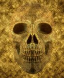 Background of skull Stock Photography