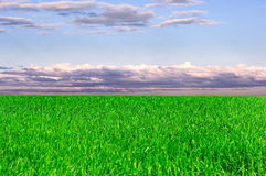 Background of sky. And grass Royalty Free Stock Photography
