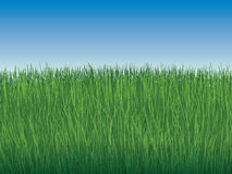 Background of sky and boundless green grass Royalty Free Stock Photos