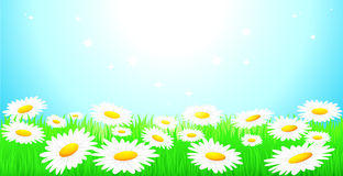Background with sky and camomiles field. Natural background with blue sky, camomiles field and green grass Royalty Free Stock Photography