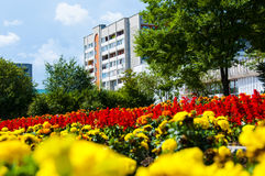 On a background of the sky, the flowers in the city Stock Photo