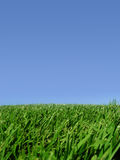 Background of sky and grass Stock Image
