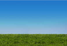 Background of sky and grass. Background of blue sky and grass stock images