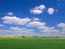 BACKGROUND OF SKY AND GRASS. Background of cloudy sky and grass Royalty Free Stock Images