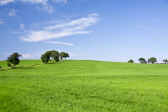 Background of sky and grass. Green field and blue sky background royalty free stock images