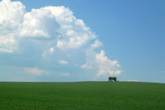 Background of sky and grass. Background of sky with clouds and grass Stock Photo