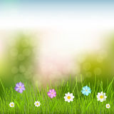 Background with sky, grass and flowers. Natural background with sky, green grass and multicolored flowers Stock Photography