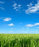 Background with the sky and herb. Royalty Free Stock Images
