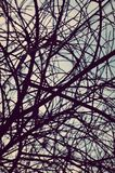 Background. Sky, tree, branches, texture, blue, net Stock Photography