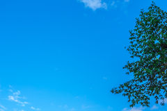 The background sky and trees. Stock Photos
