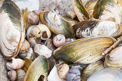 Background of small old damaged shells on the sea shore stock image