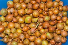 The background of small onions closeup Royalty Free Stock Image