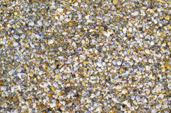 Background of small sea cockleshells Stock Photos
