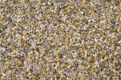 Background of small sea cockleshells Royalty Free Stock Photos