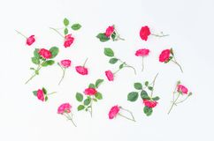 Background of small twigs of scarlet roses on a white background. royalty free stock photo