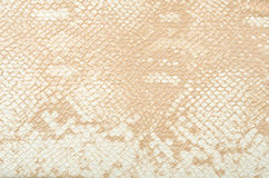 Background from snake skin Stock Photos