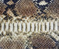 Background of snake skin Stock Photo