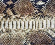 Background of snake skin Stock Photo