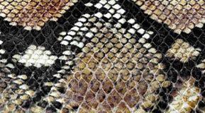 Background of snake skin Royalty Free Stock Image