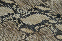 Background of snake skin leather texture Royalty Free Stock Image
