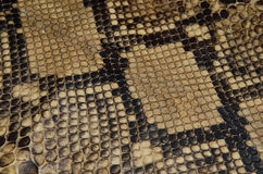 Background of snake skin leather texture Royalty Free Stock Photography