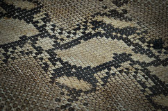 Background of snake skin leather texture Stock Photography