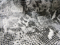 Background snake skin pattern Stock Photography