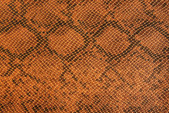 Background snake skin. Stock Photography