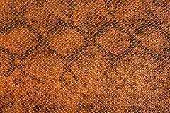 Background snake skin. Stock Photography