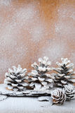 Background with snow-covered pine cones Stock Images