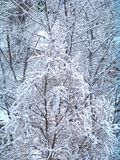 Background of snow covered trees