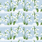 Background with snowdrops Royalty Free Stock Photos