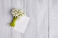 Background with snowdrops bouquet stock photos
