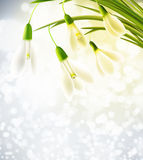 Background with snowdrops Stock Image
