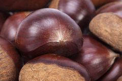 Background of some fruits of sweet chestnut, close up Stock Photography