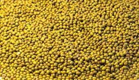 Background of soya Stock Photo
