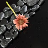 Background of a spa with stones, and gerbera flower Royalty Free Stock Photography