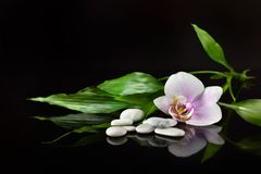 Background of a spa with stones, orchid flower and a sprig of bamboo stock image