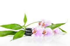 Background of a spa. With stones, orchid flower and a sprig of green bamboo Stock Photography