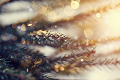 Background with the sparkling small pieces of ice on fir-tree branches. Royalty Free Stock Photos