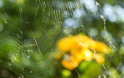 Background with spider net Stock Images
