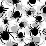 Background with spiders Royalty Free Stock Image