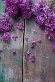 Background with splendid lilac flowers Royalty Free Stock Photos
