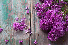 Background with splendid lilac flowers Stock Images
