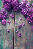 Background with splendid lilac flowers Royalty Free Stock Photo
