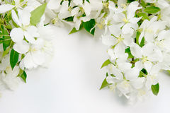 Background with the sprigs of flowering Stock Photography