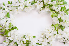 Background with the sprigs of flowering Royalty Free Stock Photo